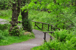 Green Trees Path