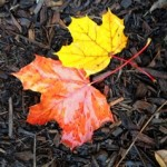 Walk into Fall...a Colorful Experience!